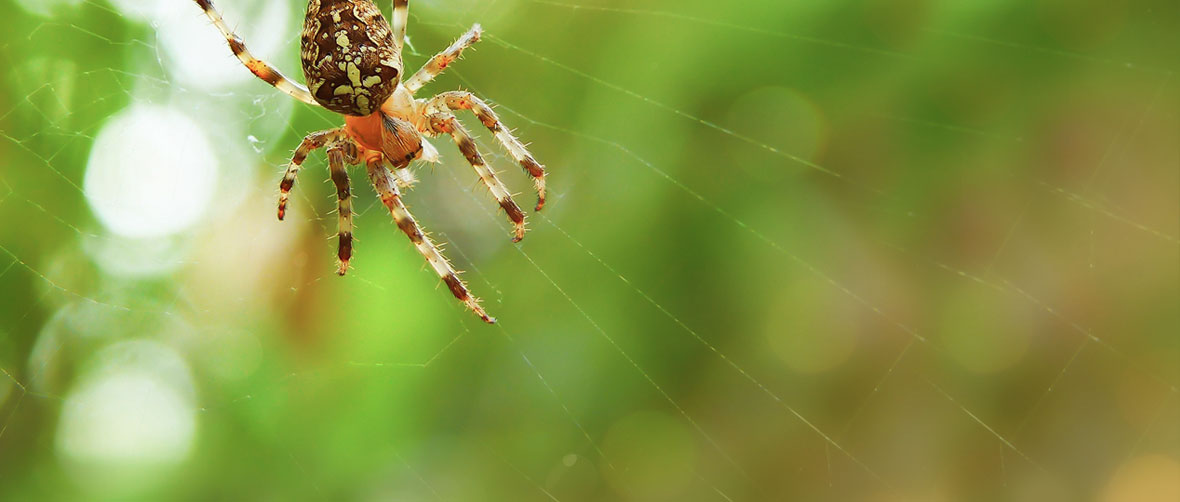 Spider Citizen Science App