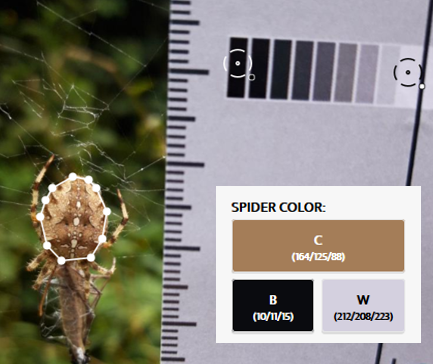 spider colour results